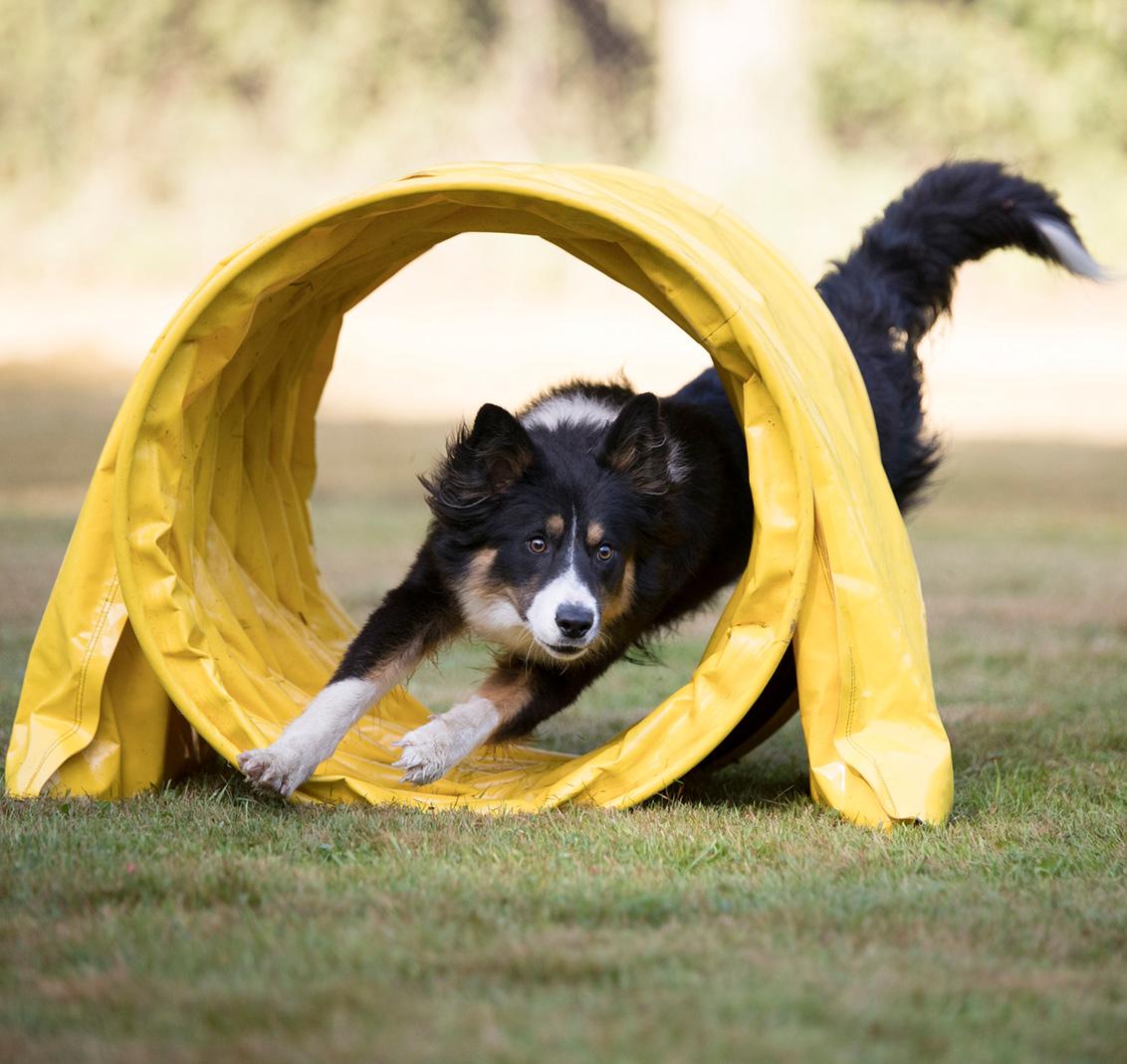 Spaß, Sport und Bewegung für Hund und Mensch!