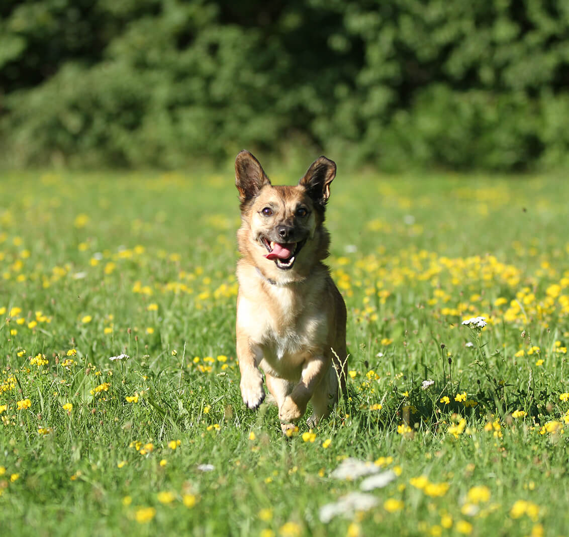 Eine gewisse Grunderziehung ist für jeden Hund wichtig.