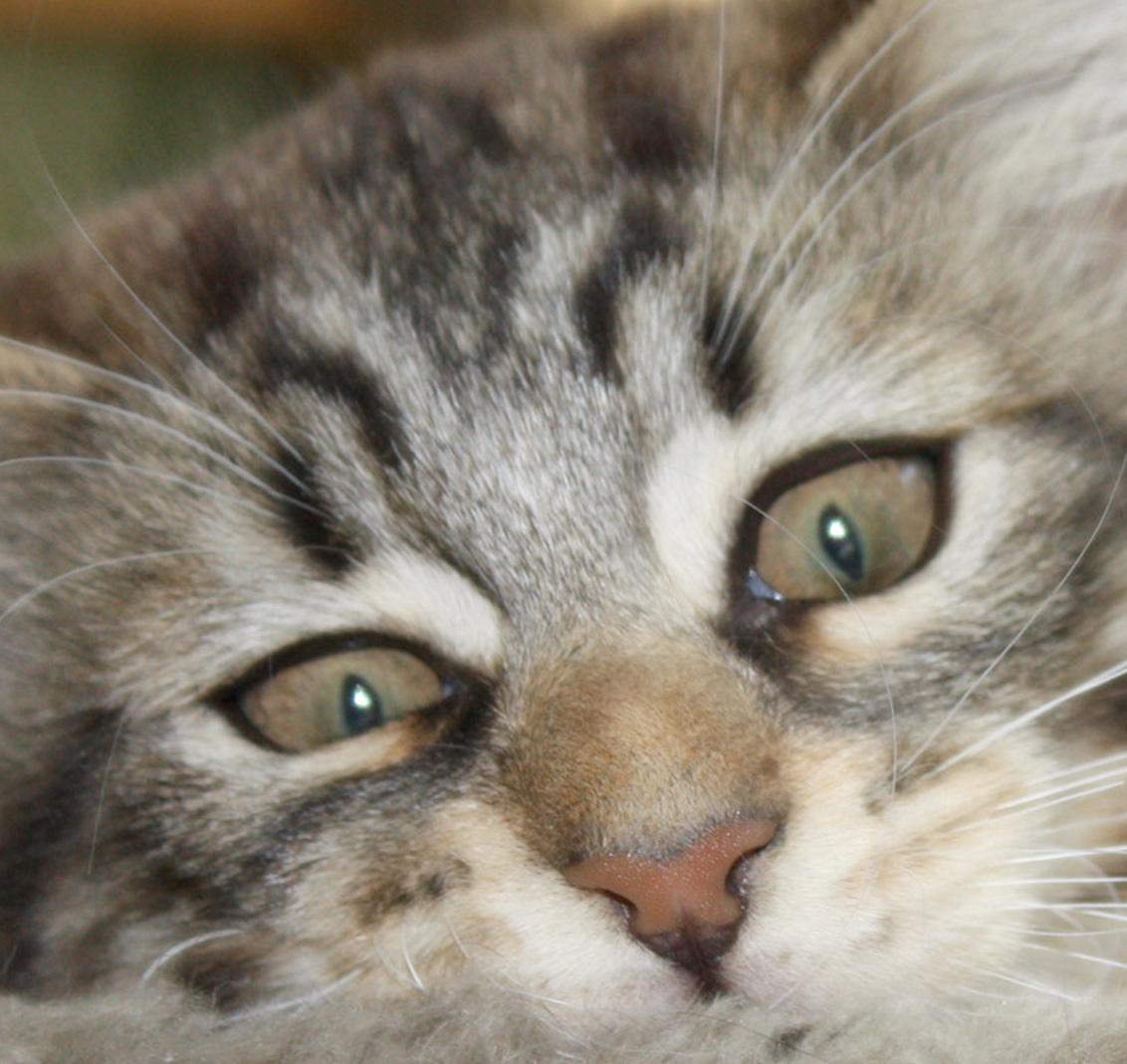 Sie haben ein Problem mit dem Verhalten Ihrer Katze?