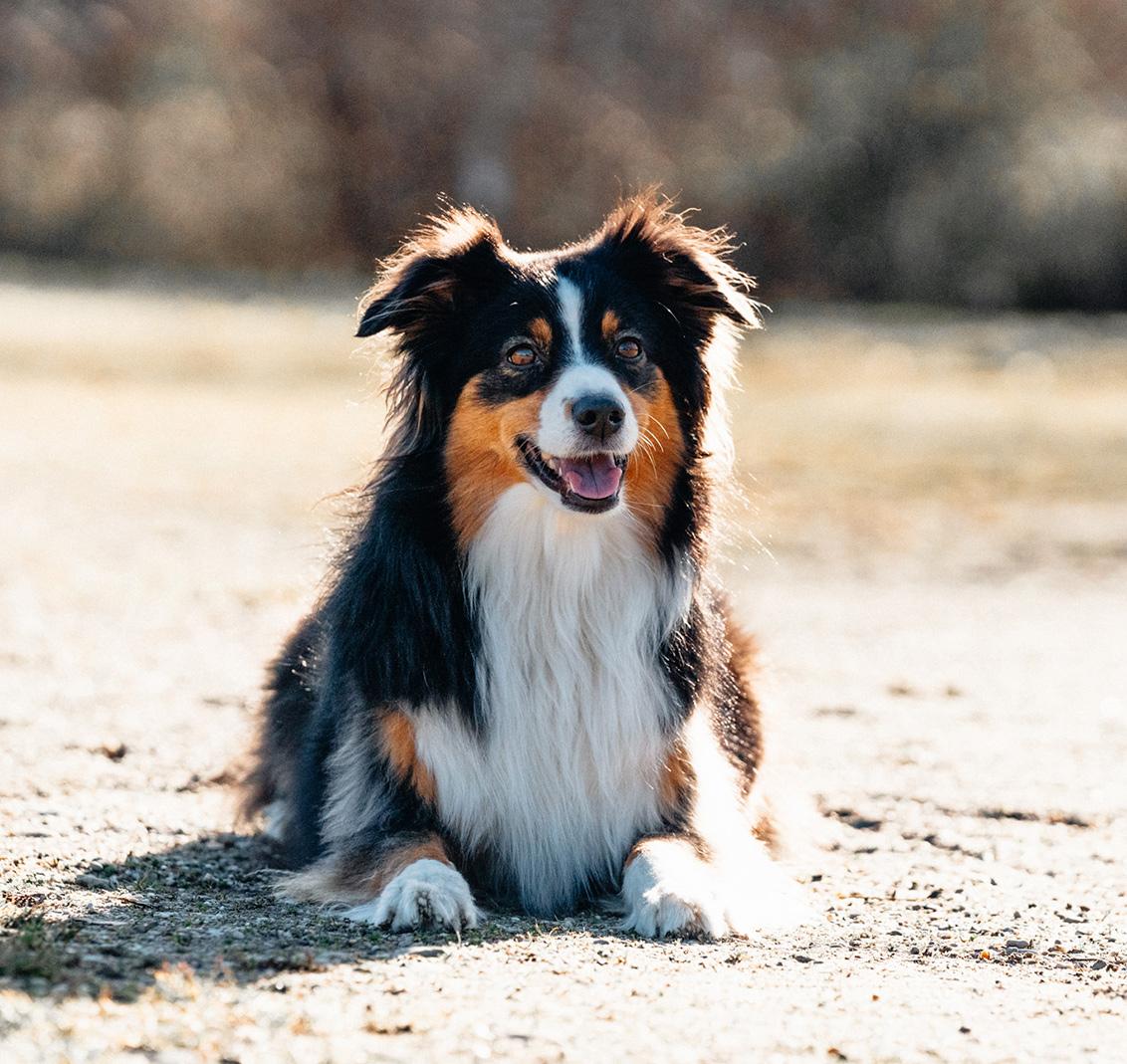 Das Team Mensch und Hund basiert auf Vertrauen