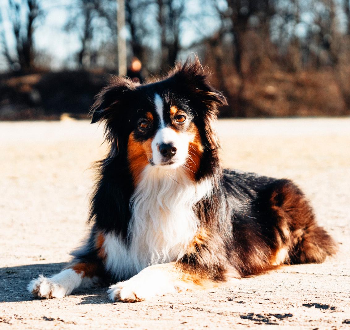 Hundeschule Freude am Hund
