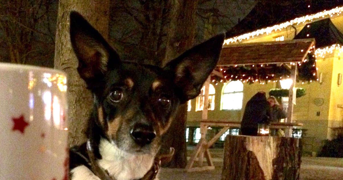 hunde tipp   hund auf dem weihnachtsmarkt   Freude am Hund München