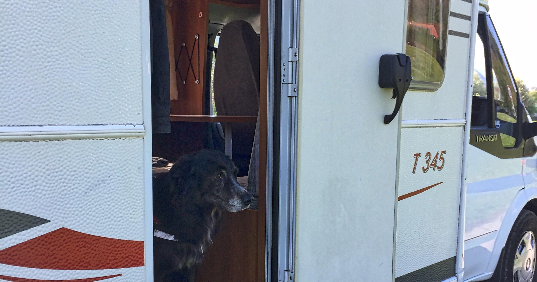 hundetipp campen mit hund   Freude am Hund München