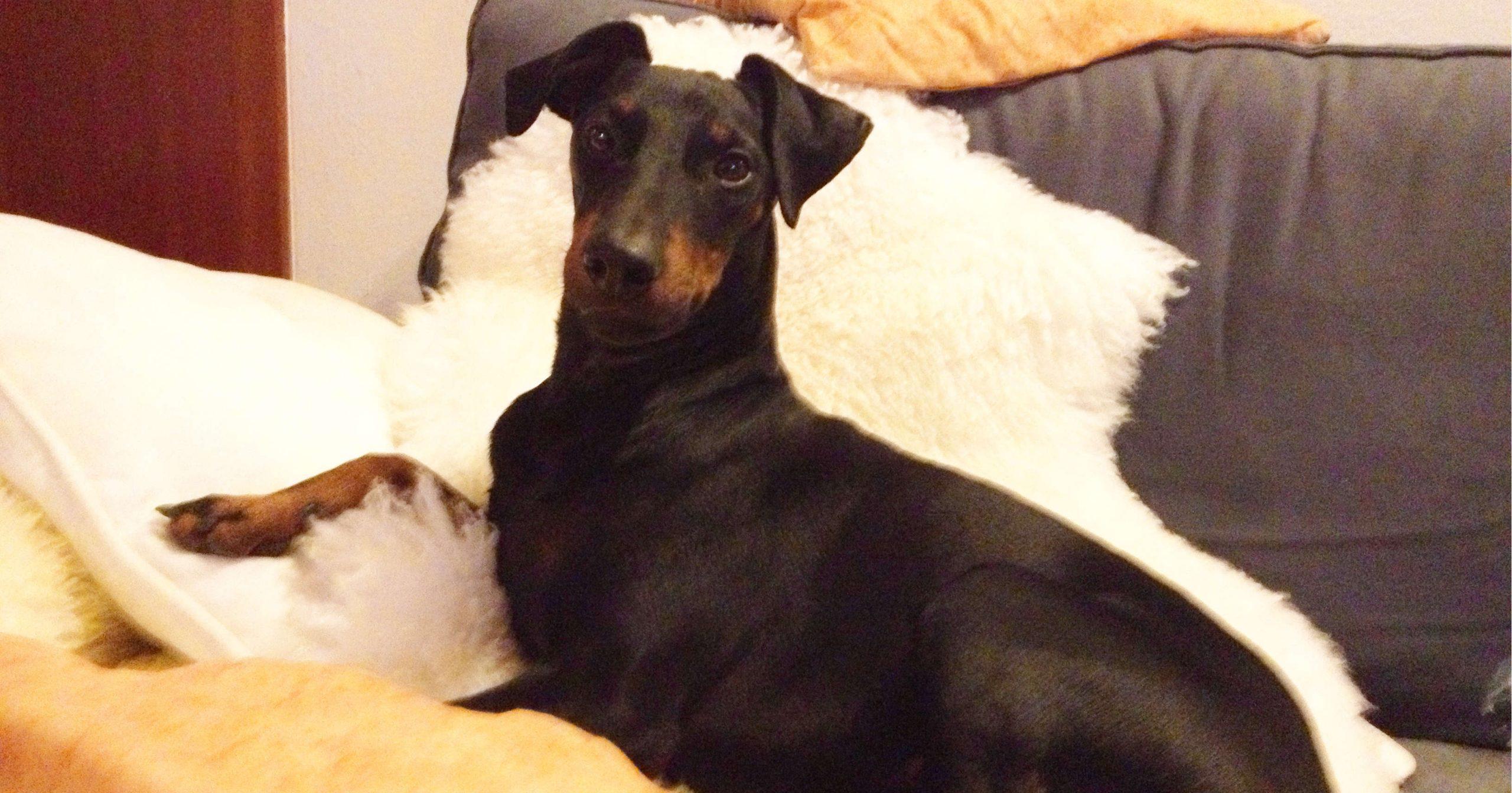 hundetipp darf mein hund auf die couch scaled | Freude am Hund München