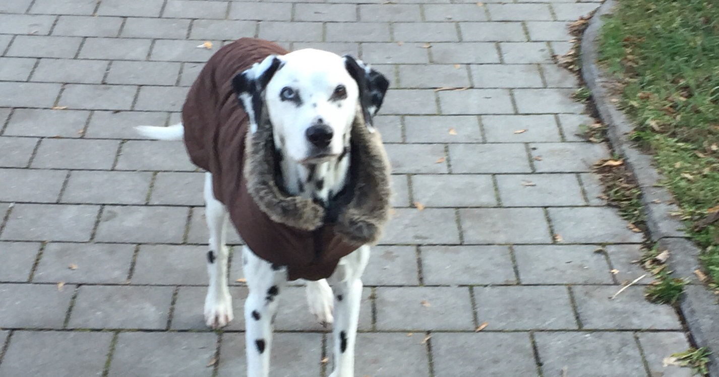 hundetipp ein maentelchen fuer meinen hund | Freude am Hund München