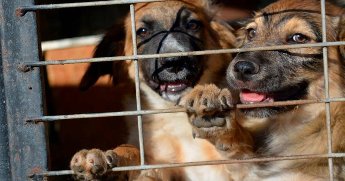 hundetipp hunde aus dem ausland | Freude am Hund München