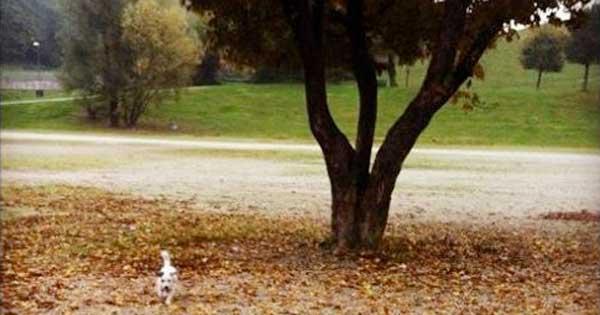 Wenn man einen Hund hat, der im Freilauf gerne auch mal größere Kreise zieht, dann empfehlen wir die Konditionierung auf die Hundepfeife! Der Hund kommt auf Pfiff und man muss nicht laut durch den Park rufen.