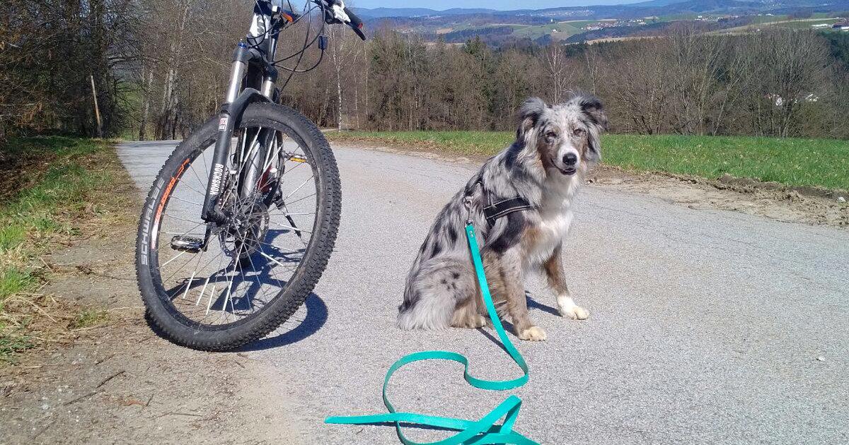 hundetipp jogger oder radfahrer jagen | Freude am Hund München
