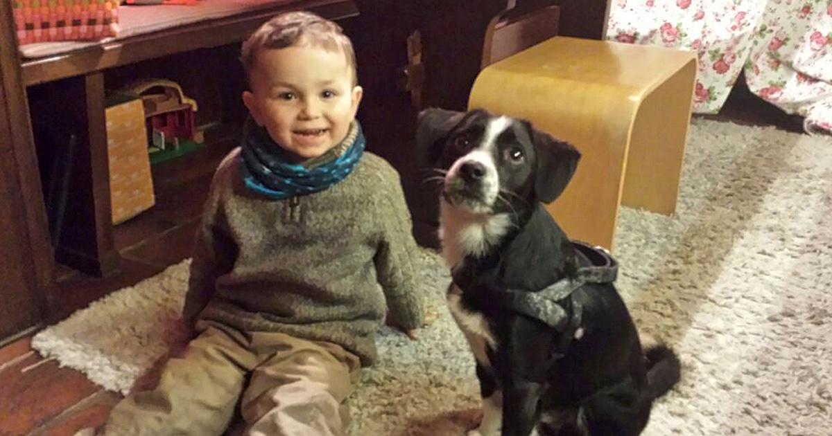 Ihr möchtet euren Hund an Kinder gewöhnen oder es steht sogar eigener Familienzuwachs an. So gewöhnt ihr euren Hund an die neue Situation und erspart euch Ärger plus Eifersucht!
