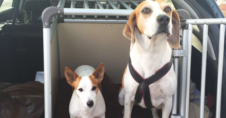 hundetipp sicherer transport | Freude am Hund München