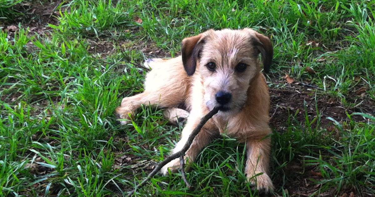 hundetipp warum kaut mein hund so gern | Freude am Hund München