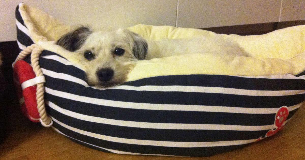 hundetipp der hund allein zuhause | Freude am Hund München