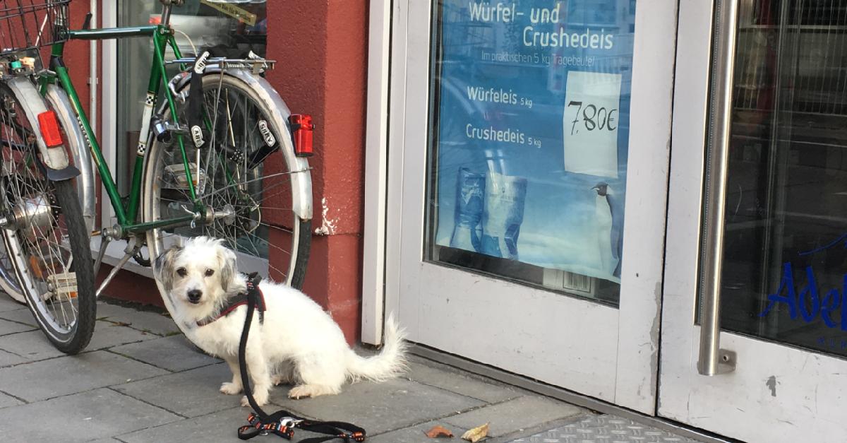 hundetipp hund einkaufen | Freude am Hund München