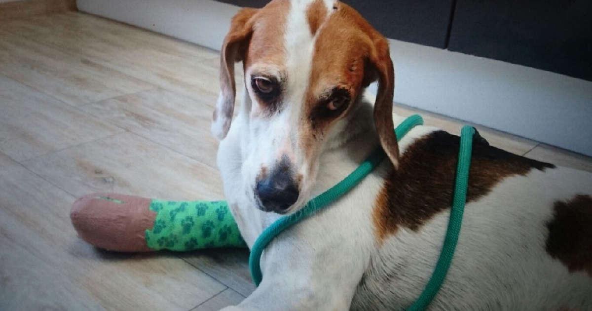 hundetipp mit dem hund zum tierarzt | Freude am Hund München