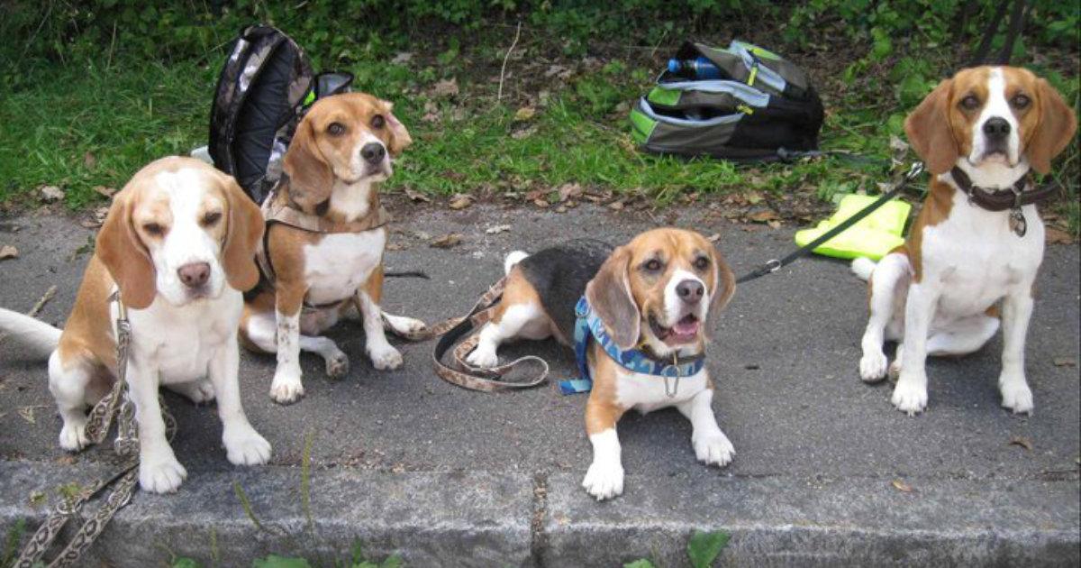 hundetipp mit hunden unterwegs im strassenverkehr | Freude am Hund München