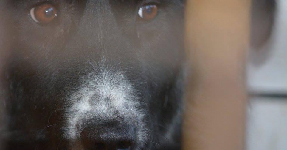 hundetipp wasserpistolen abbruchsignal | Freude am Hund München