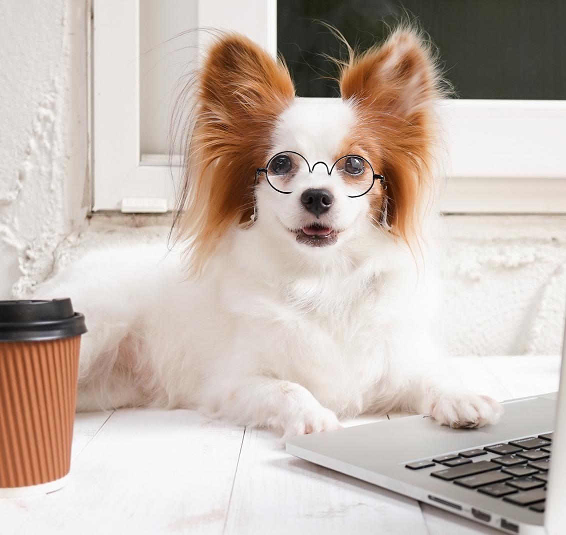 Impressum Freude am Hund